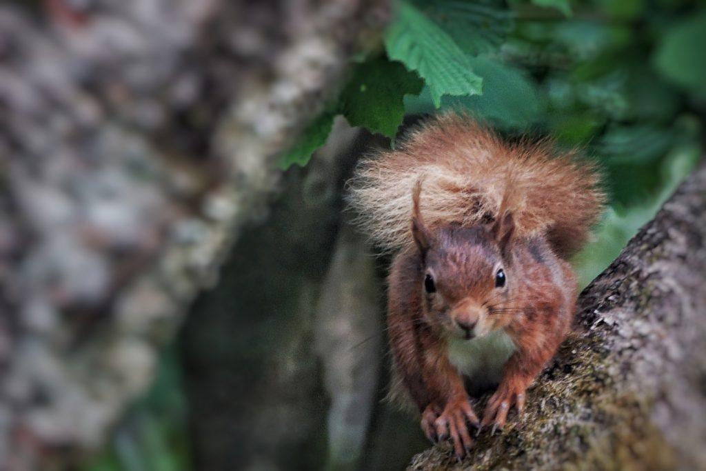 Killarney's Wonderful Wildlife
